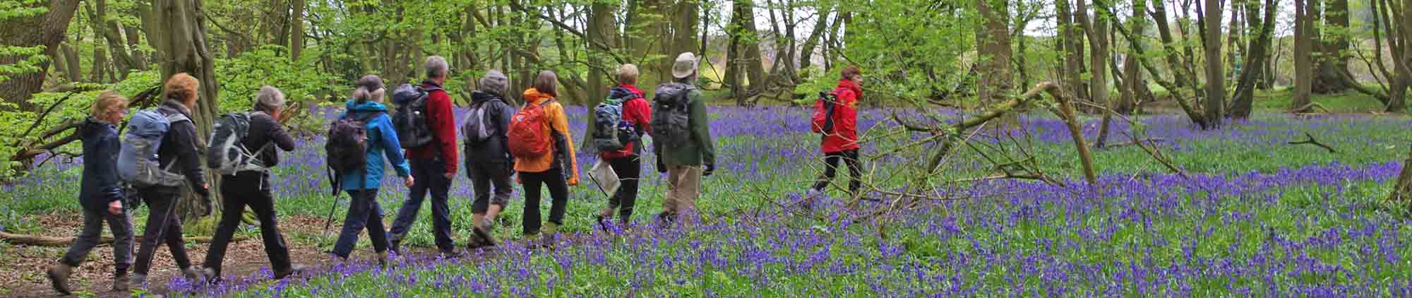 26 Apr 2015 Bluebell walk