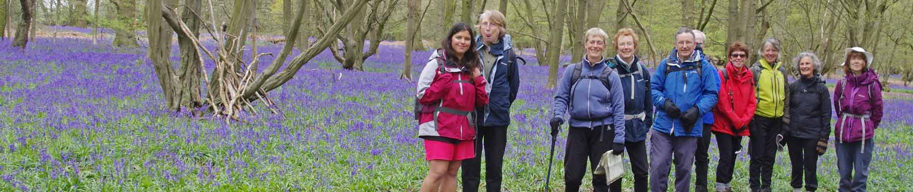 Bluebell woods, Gt Offley walk - Apr 2016
