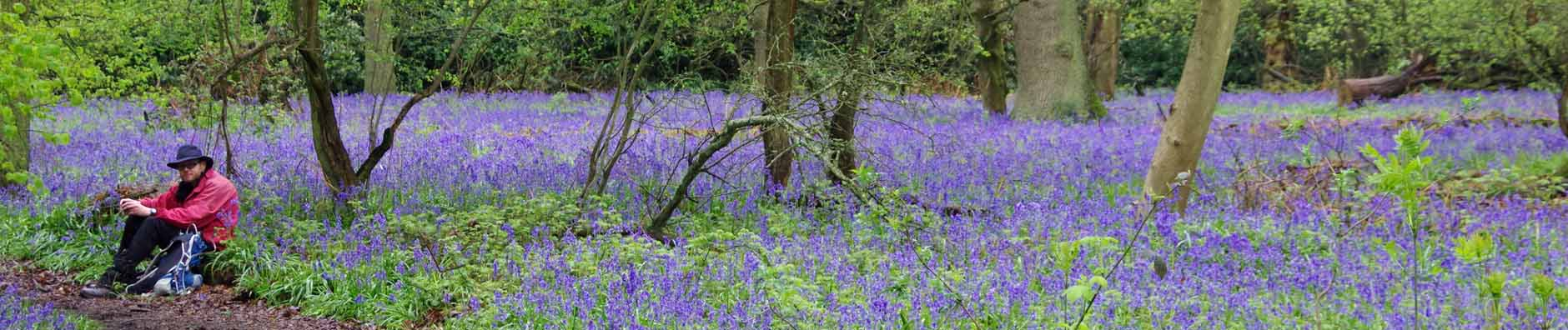 Bluebell walk - Apr 2018