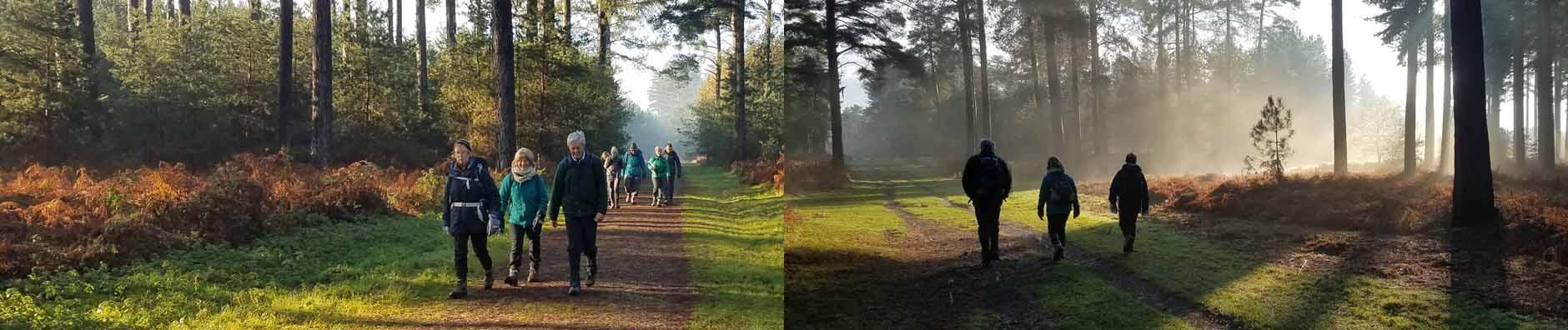 Thetford Forest walk - December 2020